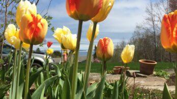 Photo Gallery, Birchwood Lodge and Farmette